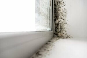 The toxic effects of hidden mould
